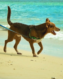 Happy Tails Joey! A One Love Animal Rescue adopter update