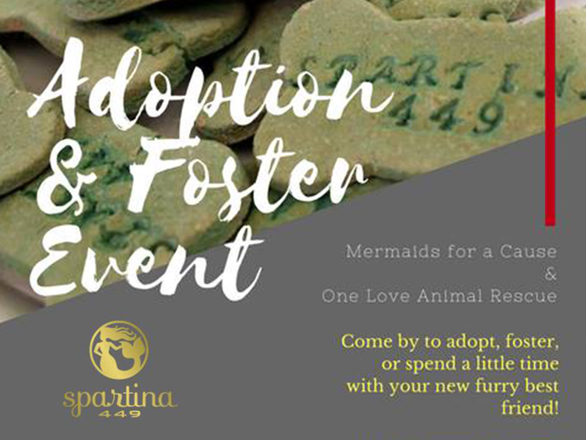 Spartina 449 Adoption and Fostering Event