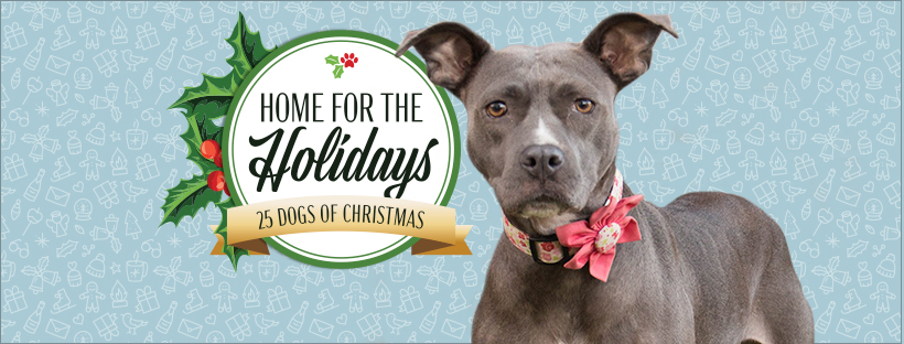 Home for the Holidays: 25 Dogs of Christmas - One Love