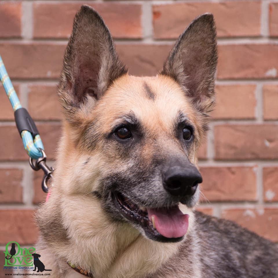 Meet Zoe, a German Shepherd, King/Mix