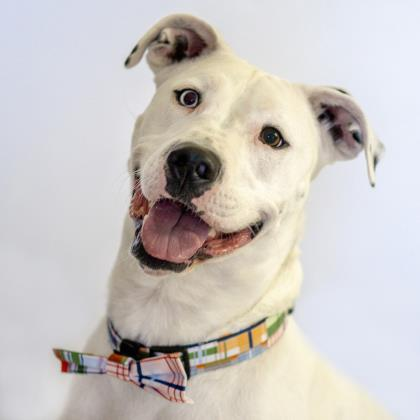 Meet Charlie, great with other dogs and loves people