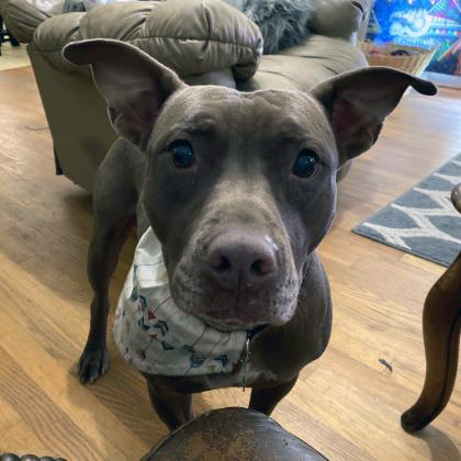 Meet Omlette, great with other dogs and loves people
