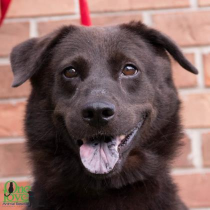Meet Tootsy, an adoptable dog